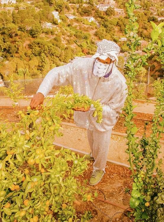 トラヴィス スコット カクタスプラントフリーマーケット CPFM コラボ ダンク ロー travis scott cactus plant flea market nike dunk low spiral sage cz2670-300